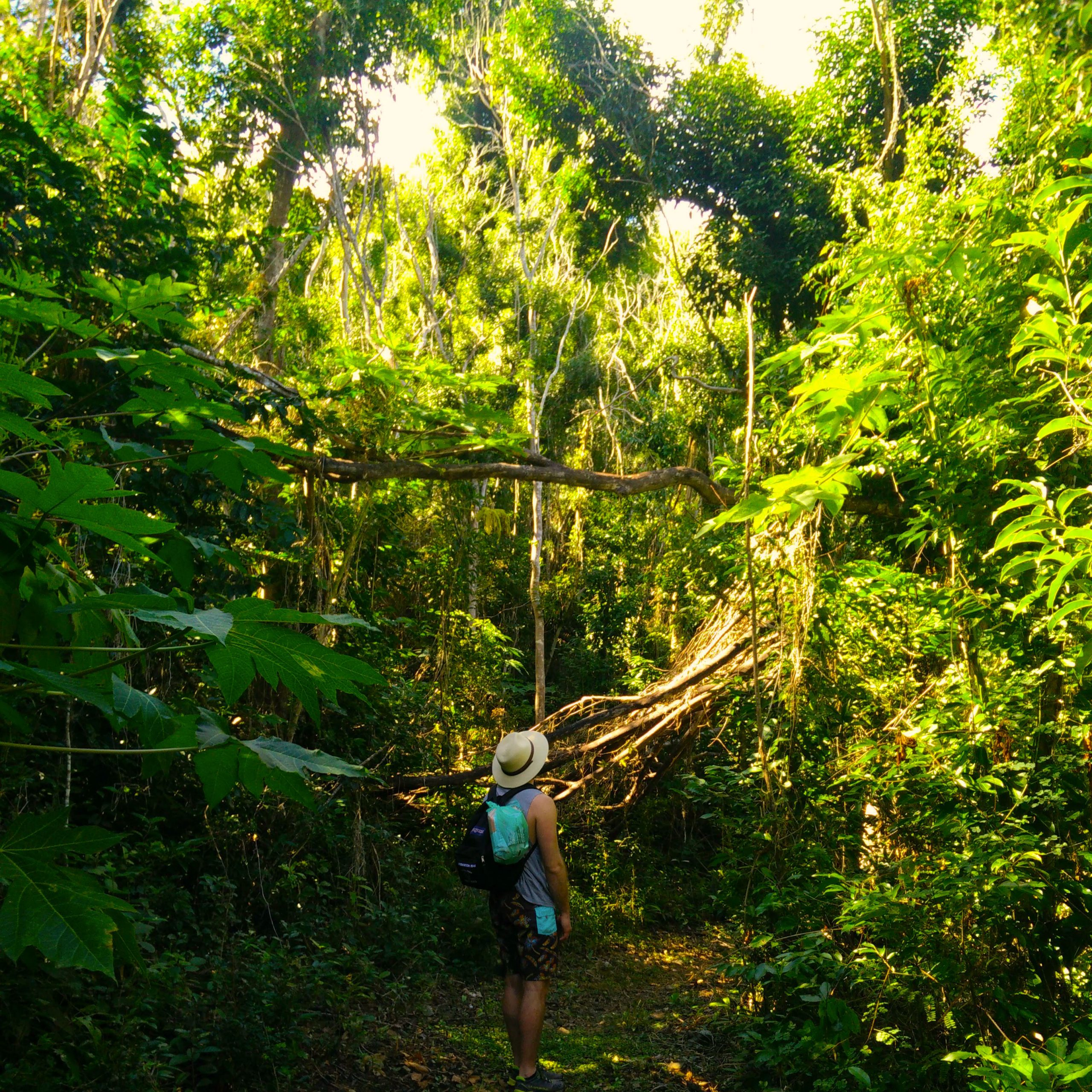 A man staring up at tropical forest with the sun hitting the tops of the trees and a path ahead.
